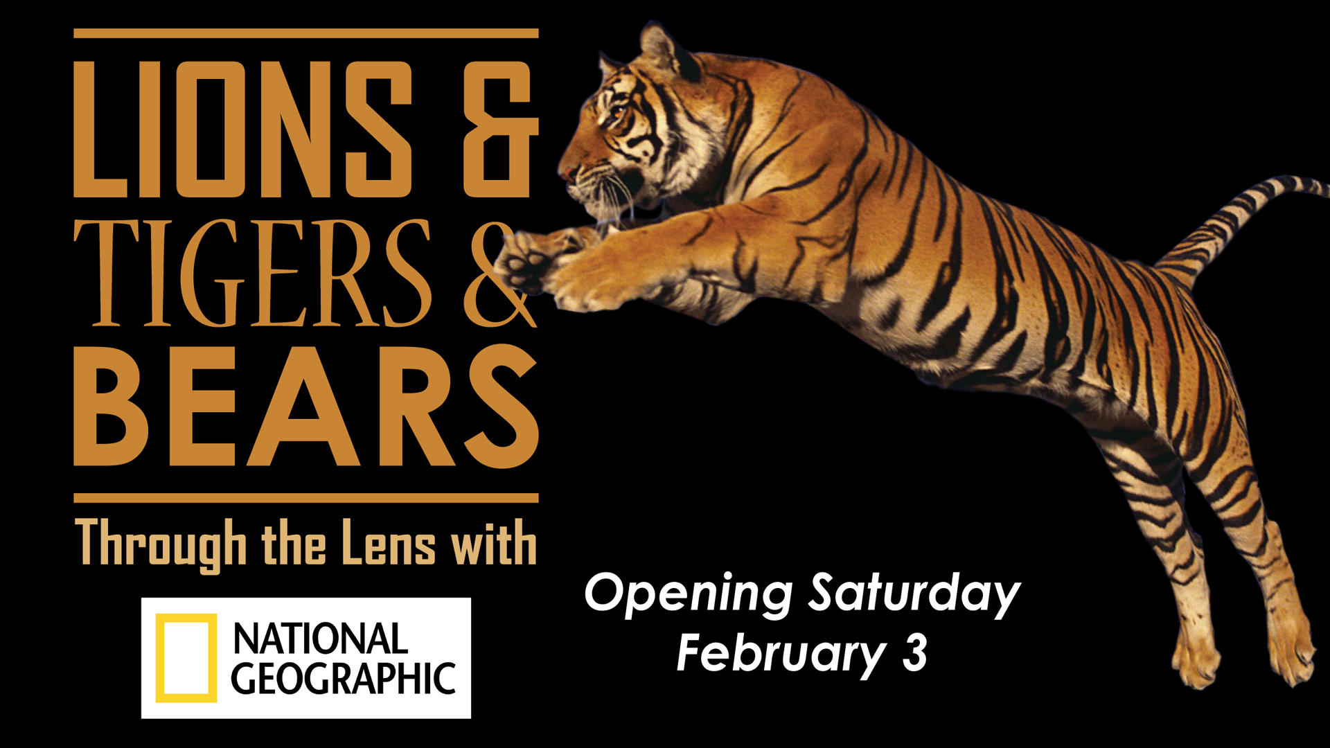 Lions, Tigers, & Bears: Through the Lens of National Geographic